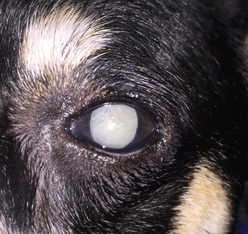 Veterinary Services in Tulsa & Oklahoma City, OK   Animal